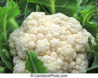 close-up of the cauliflower - close-up of the cauliflower in...