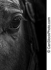 close up of the eye of a horse in black and white