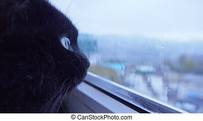 Close-up of the face of a black cat looking out the window behind which it is raining