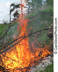 Forest fire - Close-up of the flame. Forest fire