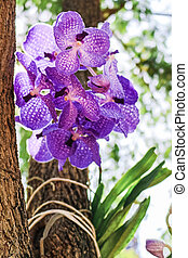 Close up of the flower of a purple orchid