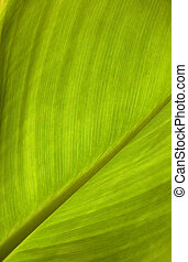 green leaf texture - close up of the green leaf texture