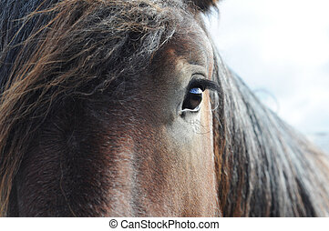 Close-up of the head of a brabant draft horse, shallow dof