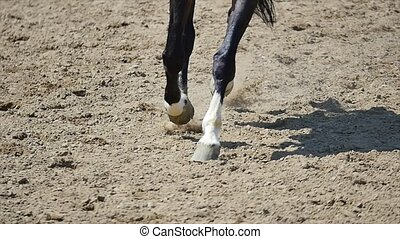 Close up of the horse hooves in motion. slow motion