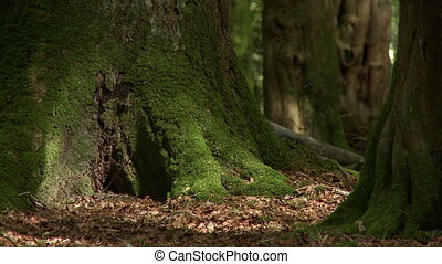 Close up of the mossy base of a tree - Close up of a small...