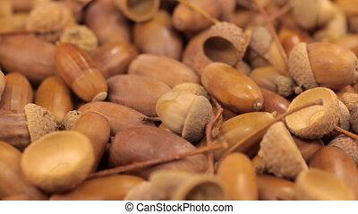 Close-up of the rotation of oak acorns.