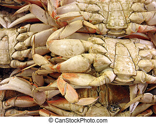 Close up of the underside of San Francisco Dungeness Crabs on display at fishermans wharf