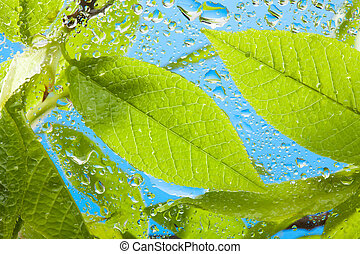 Close-up of the wet leaves