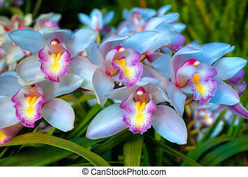 Close up of the wild Orchid Flower