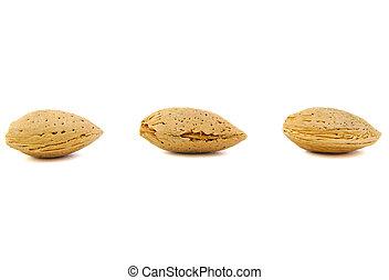Close up of three almonds