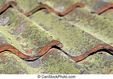tiled roof with fungus - Close up of tiled roof with fungus