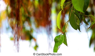 close-up of tree leaves