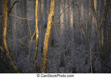 trees in thick forest - close up of trees in thick forest in...