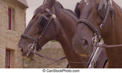Close up of two horses waiting in a barnyard