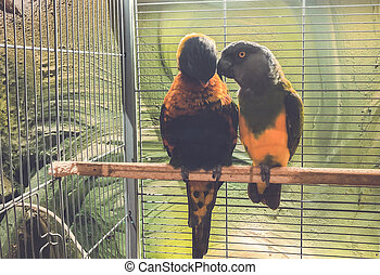 Close-up of two multi-colored beautiful parrots sitting together on a perch