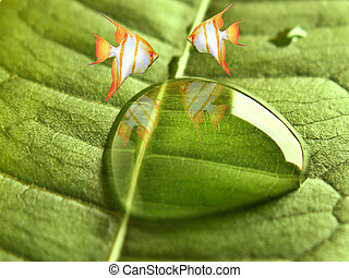 Close-up of water drop on leaf and two angel fish