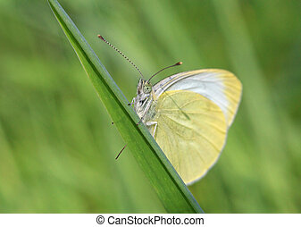 white butterfly on blade