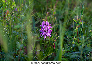 Close up of wild orchid