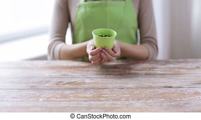 close up of woman hands holding pot with sprout