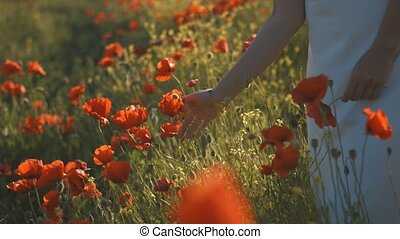 Close-up of woman's hand running through poppies field -...