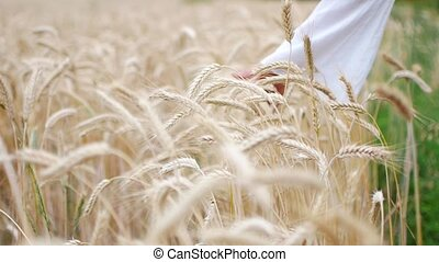 Close-up of woman's hand running through wheat field, dolly shot