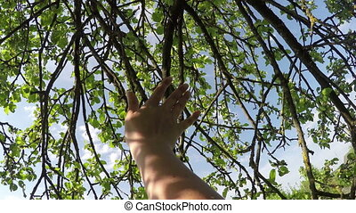Close-up of woman's hand touching beautiful green leaves....