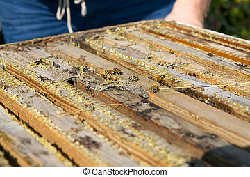 Close up of worker bees in wooden bee-keeping box