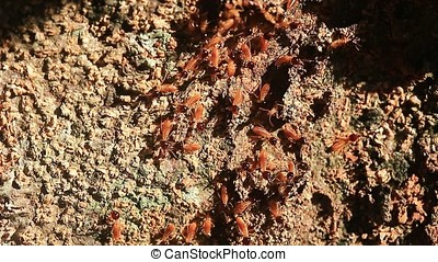 tropical termites - close-up of workers tropical termites on...