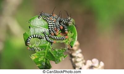 worms feeding - close-up of worms feeding on a leaf
