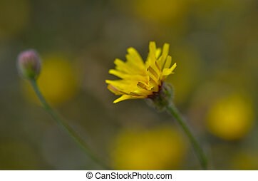 Close up of yellow flower , selective focus, shallow depth of field