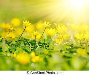 Close up of yellow flowers - Soft-focus close-up of yellow...