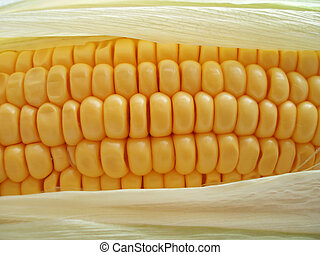 maize cob - Close-up of yellow maize cob with delicious ...