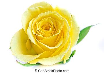 close-up of yellow rose petals