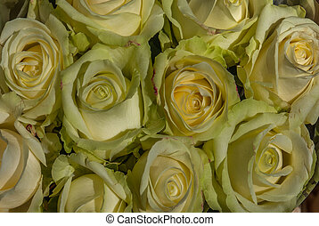 close up of yellow roses on the market.