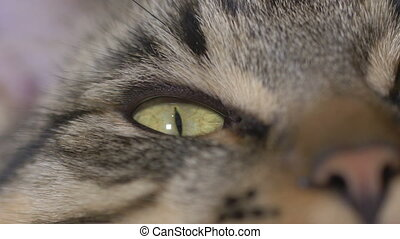 Close-up of young cat eyes