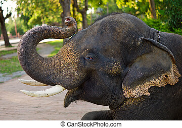 Close up of young elephant