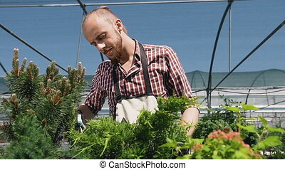 Close up of young guy with sprayer watering plants in greenhouse. Care of plants, health, ecology. The young gardener works with plants and flowers.