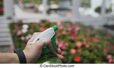Close up of young man with sprayer watering plants in greenhouse. Care of plants, health, ecology. Beautiful hand against the background of a flowering garden.