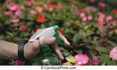 Close up of young man with sprayer watering plants in greenhouse. Care of plants, health, ecology. Beautiful hand against the background of a flowering garden. 120fps.