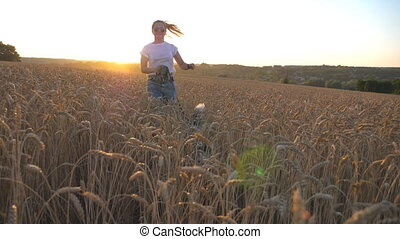 Close up of young siberian husky pulling the leash during jogging on golden wheat field at sunset. Happy girl in sunglasses running with her dog through tall ripe spikelets at meadow. Slow motion