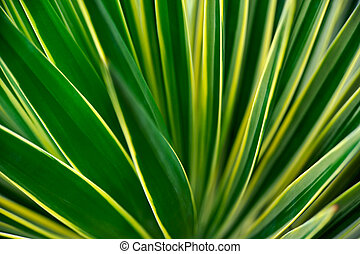 Close up of Yucca -abstract
