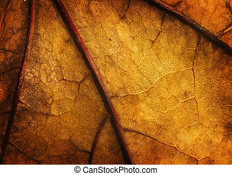 close up old dried leaf