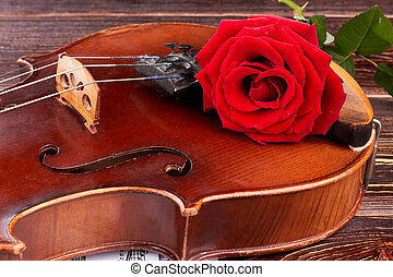 Close up old violin with red rose.