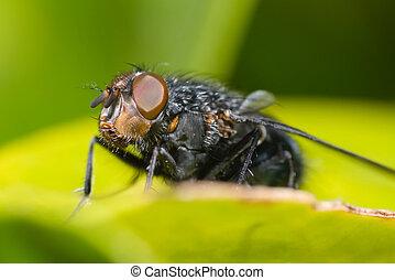 Close up on a fly's eye