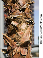 Close up on a Palm Tree