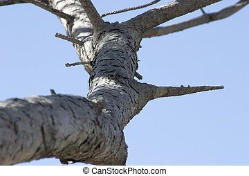 Close up on a Tree Branch