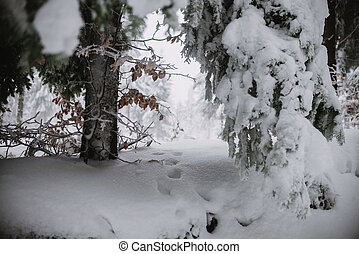 close up on animal track in the snow, forest