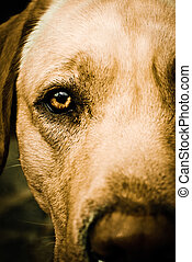Close up on brown eye of a dog