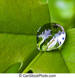 close up on drop - great image of lonely drop on leaf, close...