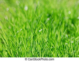 close up on green grass